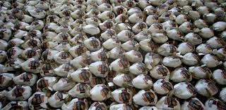 why does the price of turkeys fall just before thanksgiving