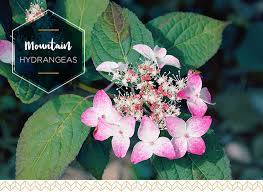 Names And Images Of Flowers - types of hydrangeas a visual guide ftd com