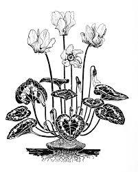 flower sketches