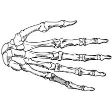 coloring page hand skeleton draw it 2 pinterest skeletons