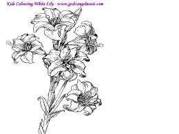 free coloring pages to print download free printable coloring pages