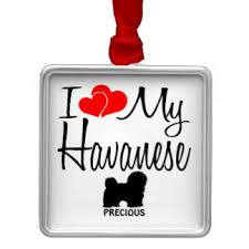 affenpinscher havanese mix havanese ornaments u0026 keepsake ornaments zazzle
