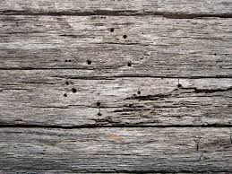 free stock photo of texture trees wood
