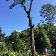 jw tree service tree trimming cutting and dangerous tree