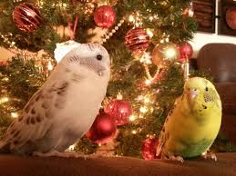 budgies are awesome a safe with our budgies