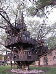 best tree house cool pictures