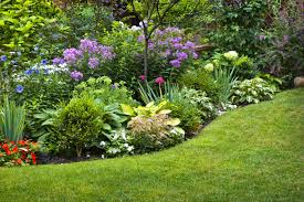 creating a rain garden in your yard