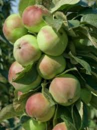 Online Fruit Trees For Sale - fruit trees for sale online free shipping over 125