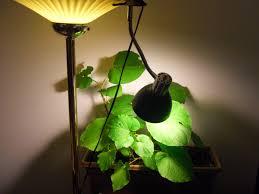 types of grow lights how ornament my eden