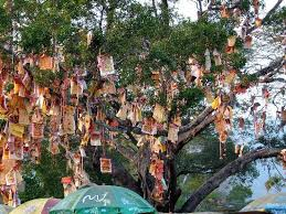 wishing tree lam tsuen wishing tree hong kong all you need to before