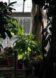 five easy grow low light houseplants grow stuff