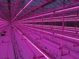Greenhouse Lights Led Grow Lights The Right Led Greenhouse Lighting Gs Horti Com
