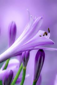 421 best violet purple images on pinterest landscapes purple