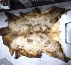 bear rug want on the farm and farm table pinterest