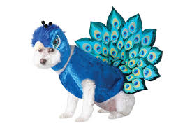 13 best dog halloween costumes 2017 last minute cheap