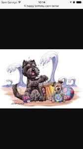 affenpinscher webster s 441 best i love cairn terriers images on pinterest cairn