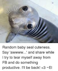 Baby Seal Meme - random baby seal cuteness say awwww and share while i try to tear