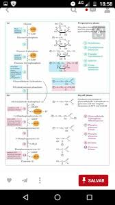 25 best the krebs cycle images on pinterest biochemistry ap