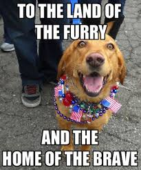 4 Of July Memes - 107 best animal memes images on pinterest funny animals funny