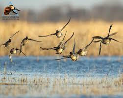 duck hunting wallpaper wallpapersafari duck hunting wallpaper dogs this year s youth hunt is sold