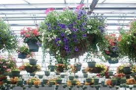 Flower Area - business q u0026a center greenhouse and power flowers u2013 the denver post