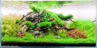 Small Tank Aquascaping The Nature Style Planted Tank Aquascape Awards