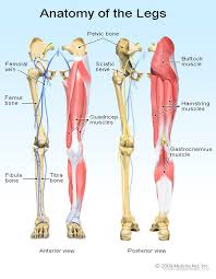 Anatomy Of Body Muscles Ruptured Tendon Read About Symptoms And Treatment