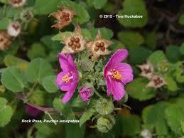 texas native plants nursery texas native plant week my gardener says u2026