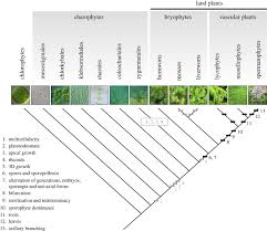 development and genetics in the evolution of land plant body plans