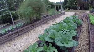 winter garden growing collards kale spinach and broccoli youtube