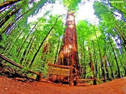 1069 best tree spirits tree s tree houses gods wood trees