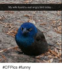 my wife found a real angry bird today cfpics funny angry birds