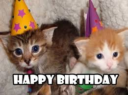 Happy Cat Meme - best collection of funny happy birthday meme 123happybirthday in