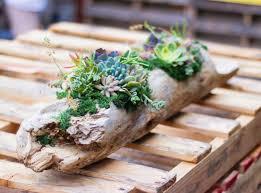 succulent arrangements to roots