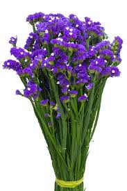 statice flowers buy purple statice filler flower plant for floral arrangements