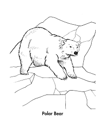 polar bear coloring pages on ice coloringstar