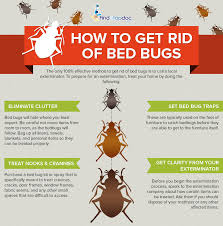 Bed Bugs In Mattress How To Get Rid Of Bedbugs Fast