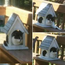 catbird twitter search