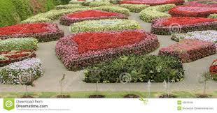 ornamental flower garden stock photo image of bloom 49976162