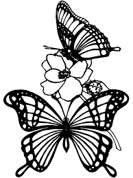 butterfly color pages gallery of the best coloring pages