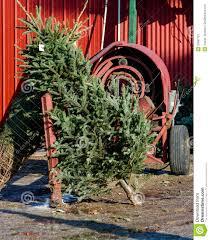 christmas tree and tree wrapping machine stock image image 35697121