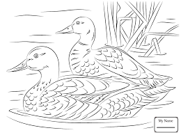 birds funny mallard in a pond mallard coloring pages abcfunkids me