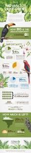 amazon rainforest native plants best 25 amazon rainforest animals ideas on pinterest amazon