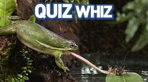 freaky frogs quiz whiz