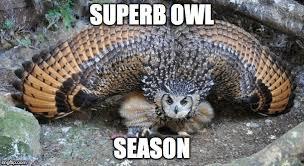 Superb Owl Meme - superb owl memes imgflip