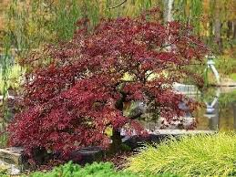5 great trees for small spaces southern living