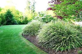 Bushes For Landscaping Small Landscaping Bushes 6 Low Maintenance Landscaping Shrubs