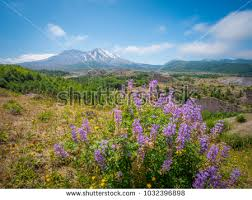 volcano flowers breathtaking views volcano amazing valley flowers stock photo
