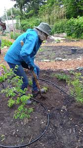 washington native plants washington native plants find a new home in our garden u2014 orcas
