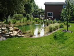 Backyard Swimming Ponds by Natural Swimming Pools Warwickshire Swimming Pond Design